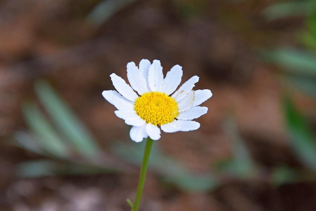 خواص باور نکردنی گل مینا
